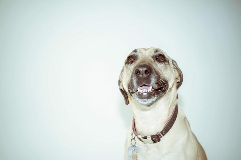 Hvad er egentlig rigtig hundemad?