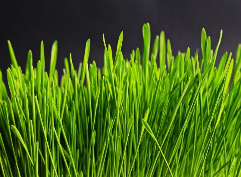 Diverse blandinger med græsfrø